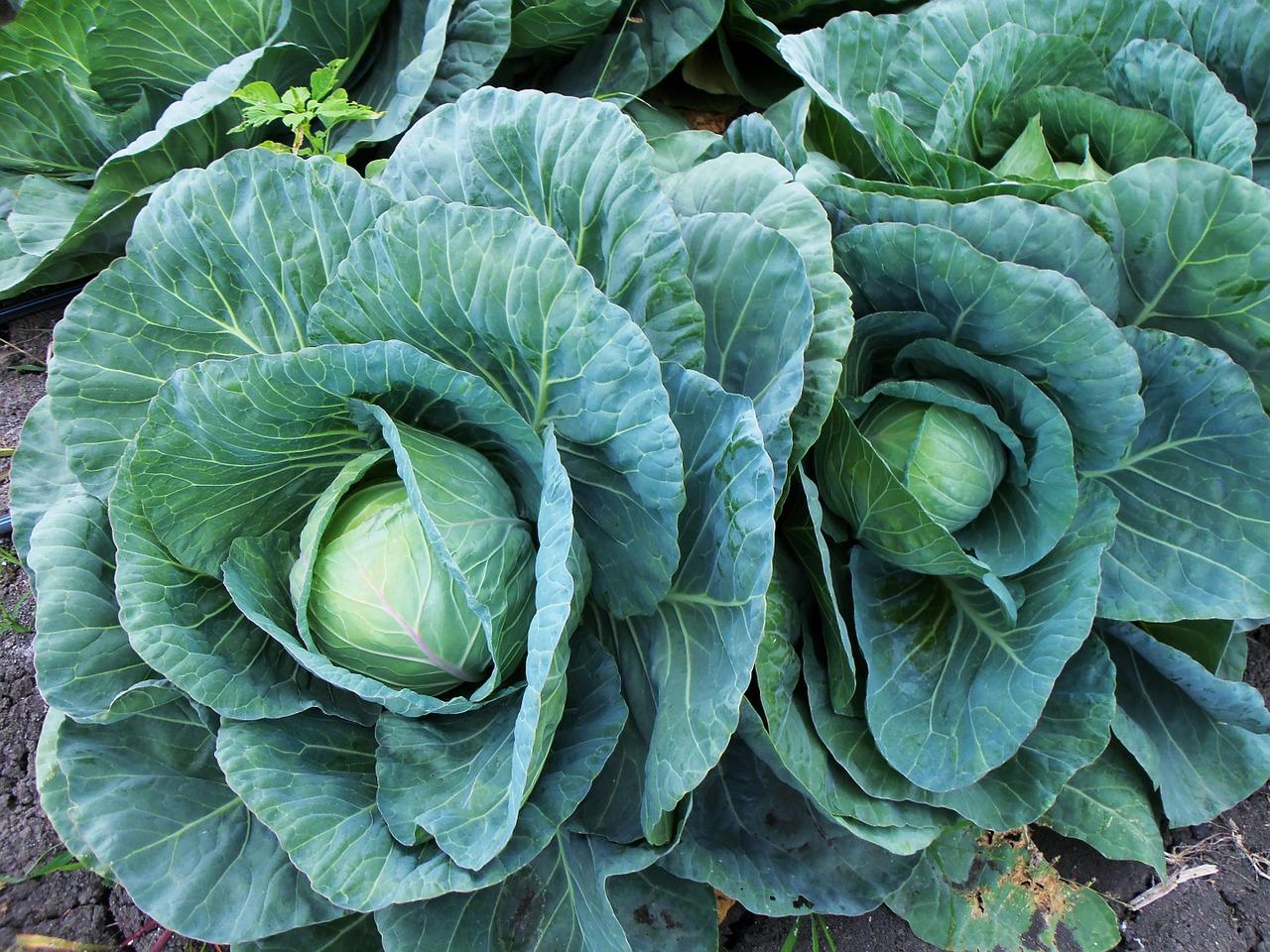 Anti-inflammatoriske grønnsaker – del 3 av 3
